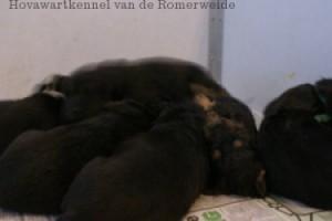 A-nest van de Romerweide wk3 1