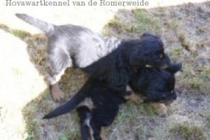 A-nest van de Romerweide wk6 5